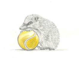 hedgehog tennisball