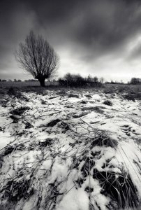 winter-wind-duotone