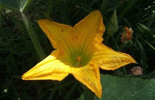 Flores comestíveis e seus nutrientes