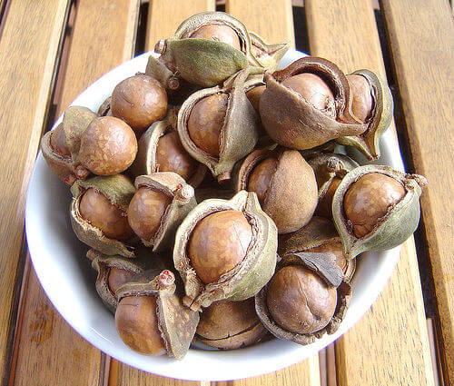macadamia Descubra as propriedades destes 10 frutos secos