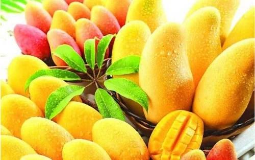 A manga é uma das melhores frutas tropicais para a saúde