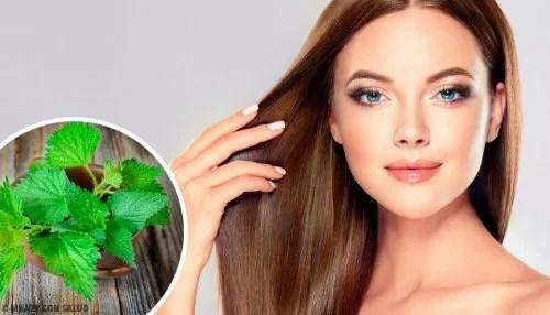 beneficios-da-urtiga-para-o-cabelo-500x286 Veja como a urtiga é efetiva para cuidar dos cabelos