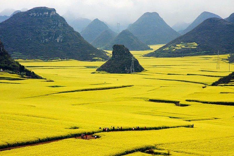 Campos de canola - China