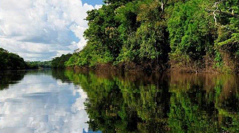 Manaus: fim de ano ecológico na maior floresta tropical do planeta