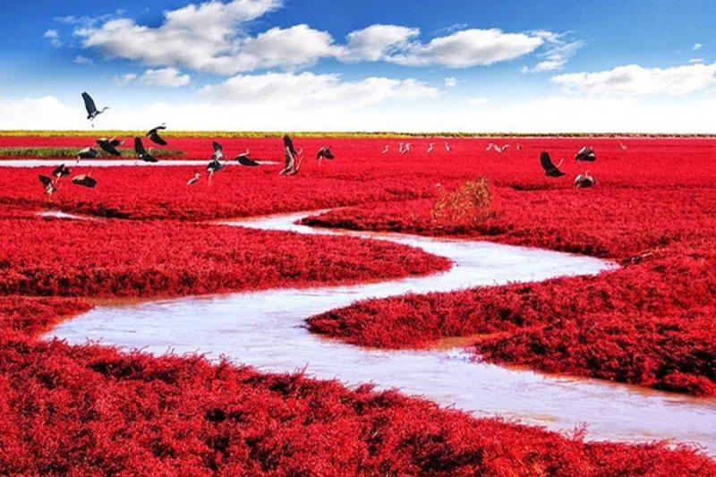 Praia Vermelha, Panjin - China