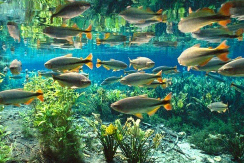 Rio Baía Bonita Aquário Natural