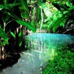 Fervedouros Do Jalapão E Suas Águas Que Não Afundam