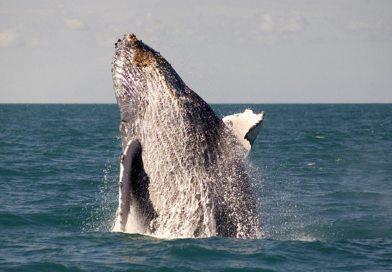 Prado – Baleias Jubarte Praias Paradisíacas E Gastronomia Internacional