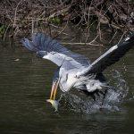 Miranda – O paraíso do pantanal sul