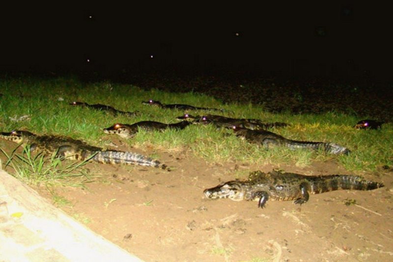 5 atrações imperdíveis para conhecer no Pantanal