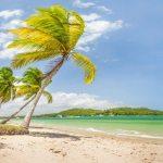 Praia Dos Carneiros – A Mais Bela De Pernambuco