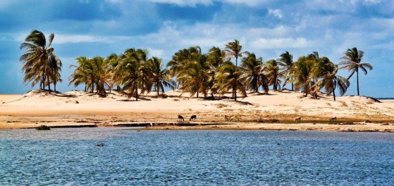 Foz Do São Francisco Alagoas Brasil Viagens