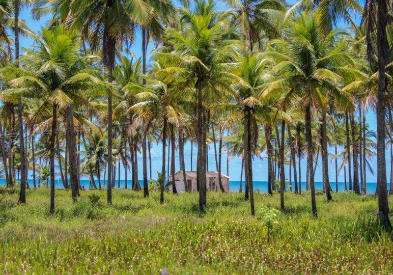Itacarezinho Bahia