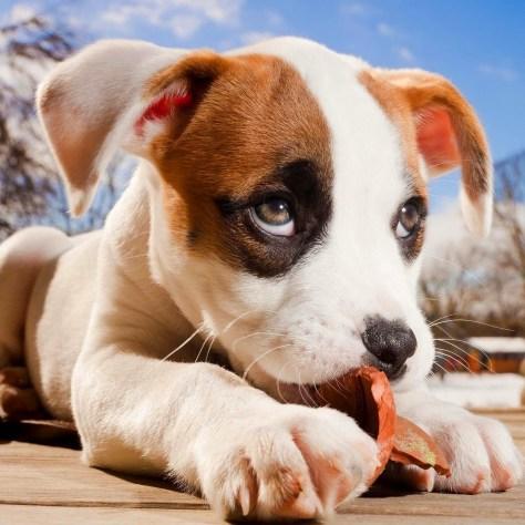 Não se deve dar ossos aos cães nem objectos perigosos com pontas ou arestas afiadas para brincarem