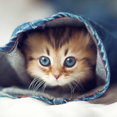 Gatinho protegido do frio. melhorsaude.org