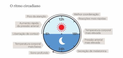 Ritmo circadiano melhorsaude.org melhor blog de saude