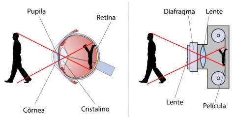 Olhos: Funcionamento do olho humano melhorsaude.org melhor blog de saude