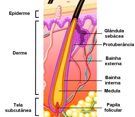 Estrutura do pêlo
