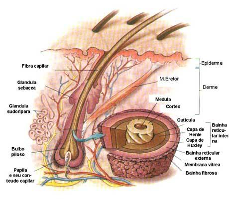 estrutura-cabelo