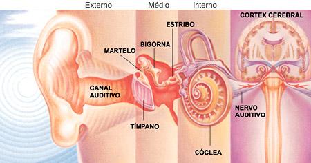 Ouvido externo médio interno cerebro melhorsaude.org melhor blog de saude