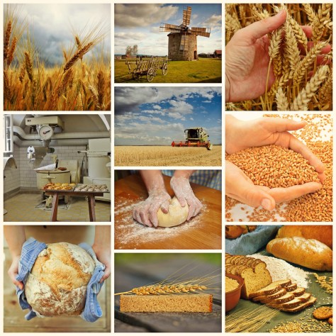 pão melhorsaude.org melhor blog de saude