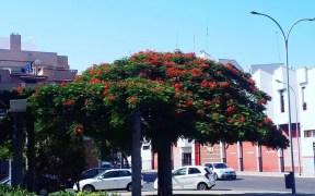 Plaza Daoiz y Velarde, tesorillo
