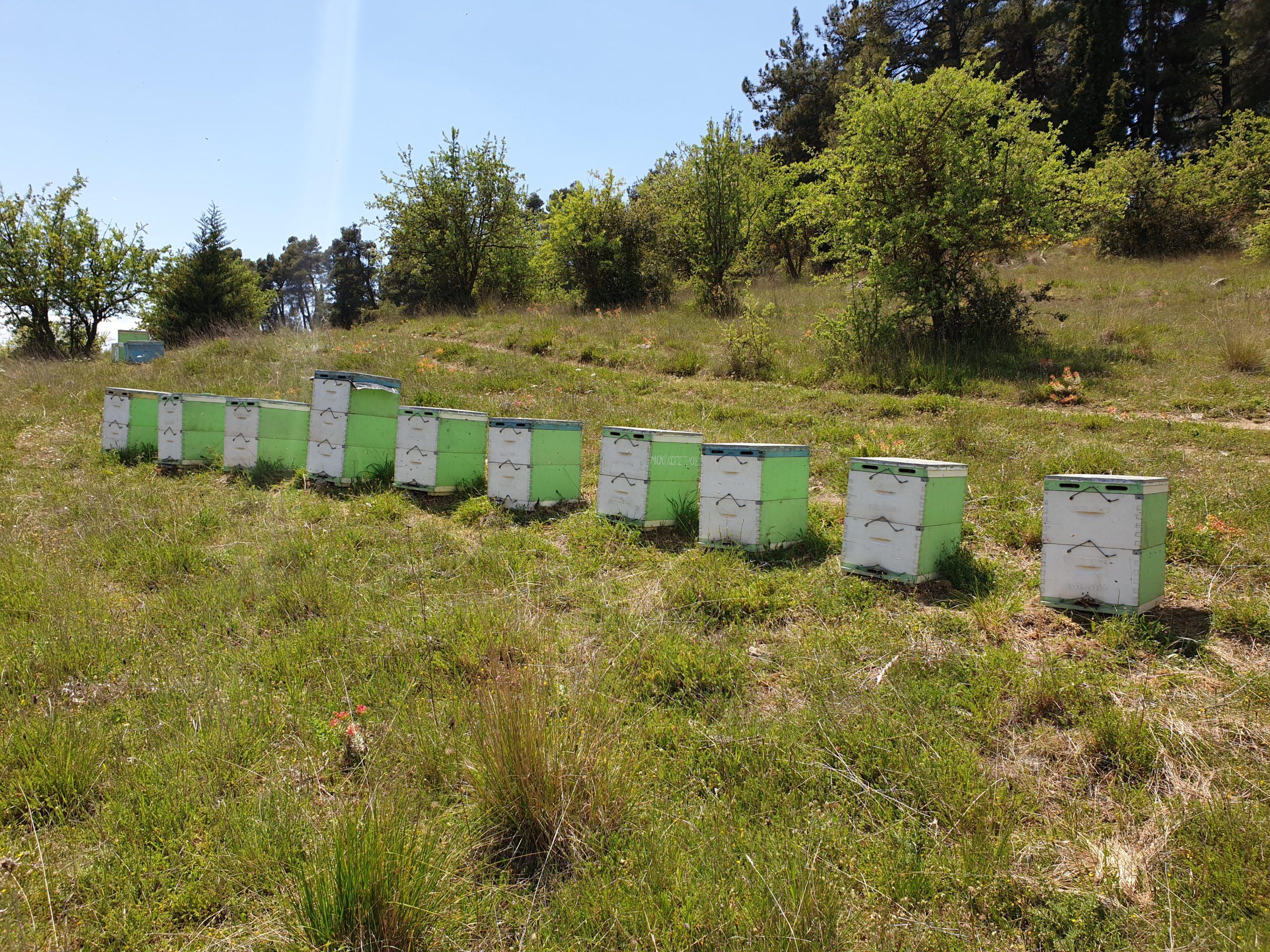 Μελισσοκομία Μουγκοπέτρος