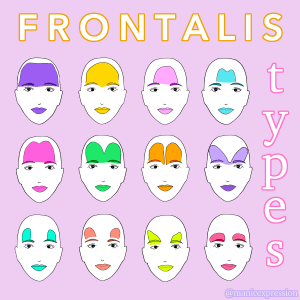 frontalis shapes illustration