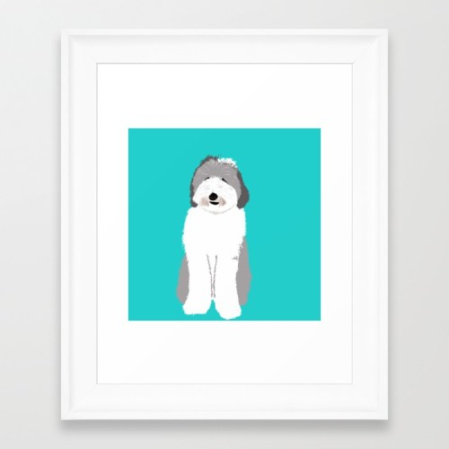 Lucy The Sheepadoodle Framed Print by Melinda Todd