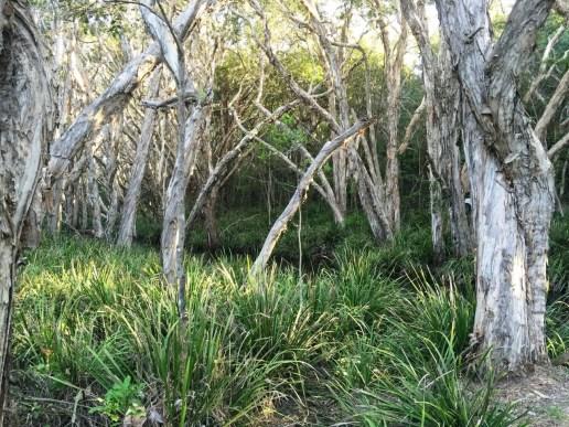 Old Black Rock Swamp
