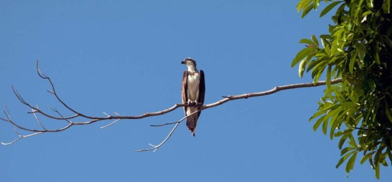 spending the morning with the ospreys ... 9 oct 2011