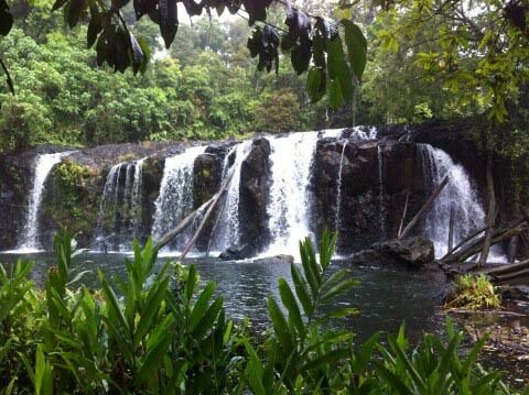 bushwalking in the tablelands and a quiet swimming hole ... 9/2/2013