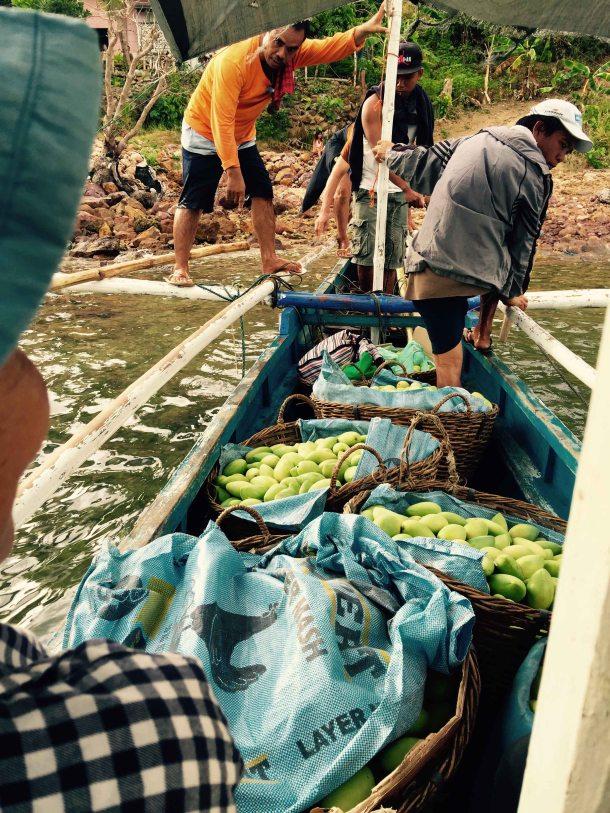 loading the mangoes