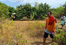 what is left of the mango plantation