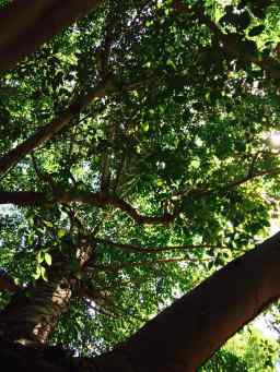 the secrets of trees
