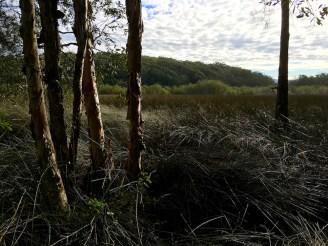 paperbark wetlands