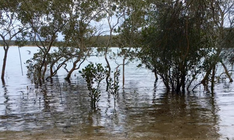 River and mangroves