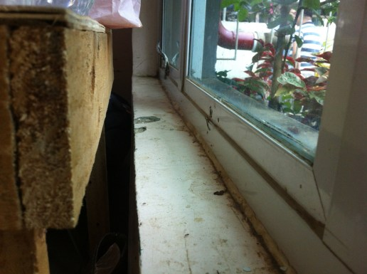 hygiene standards allow ants and food scraps