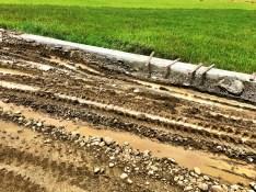 sodden rice paddies