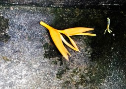 forgotten flower