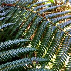morning-light-on-ferns