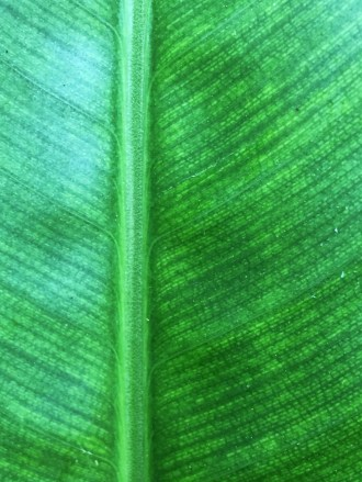 green leaf1