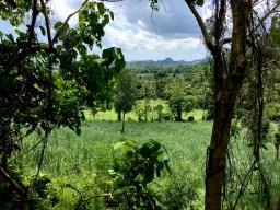 farmlands of capiz, Philippines