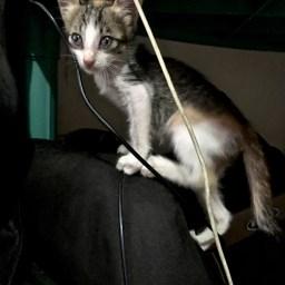 kitten climbing