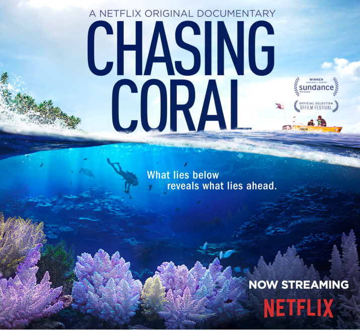 Chasing Coral Profile and Instagram
