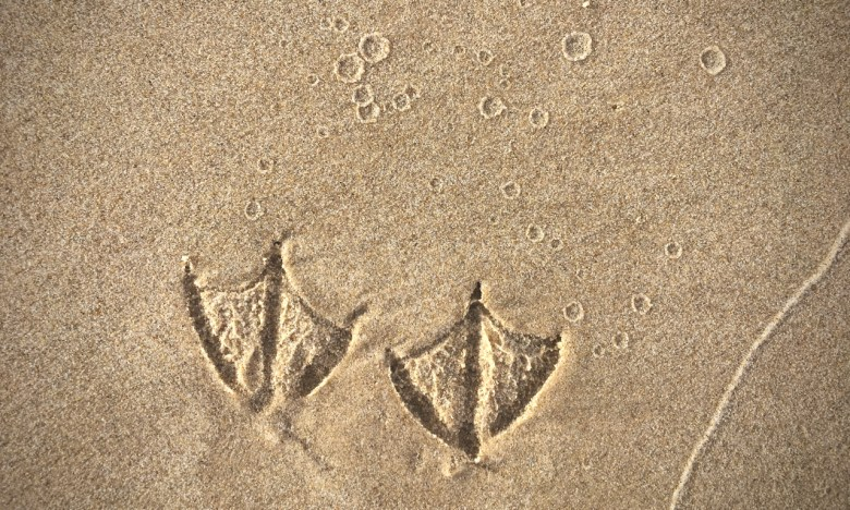 bird foot prints in the sand