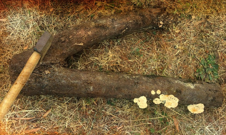 v shaped log with an axe