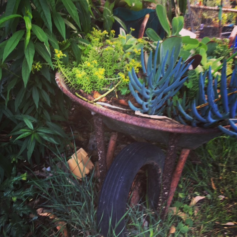 little garden in a wheelbarrow