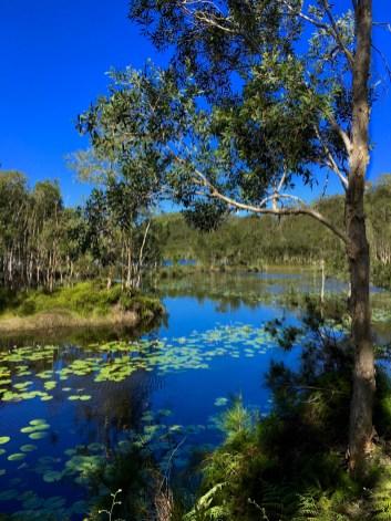 urunga wetlands part 2