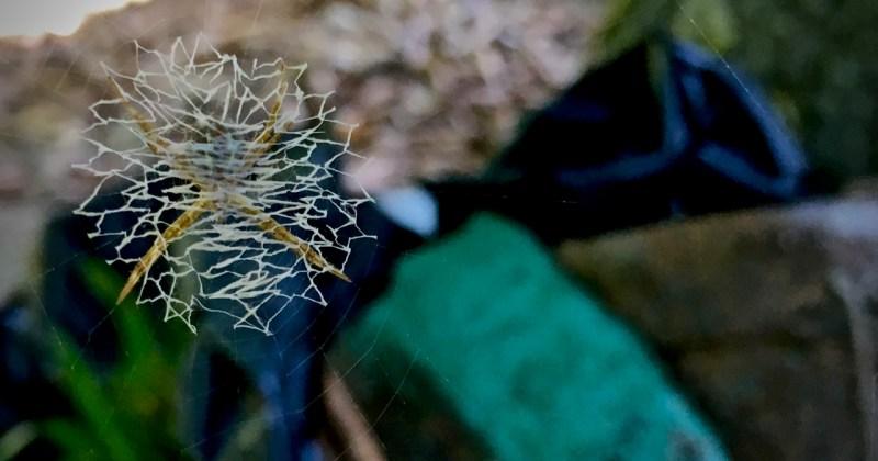 spider waits